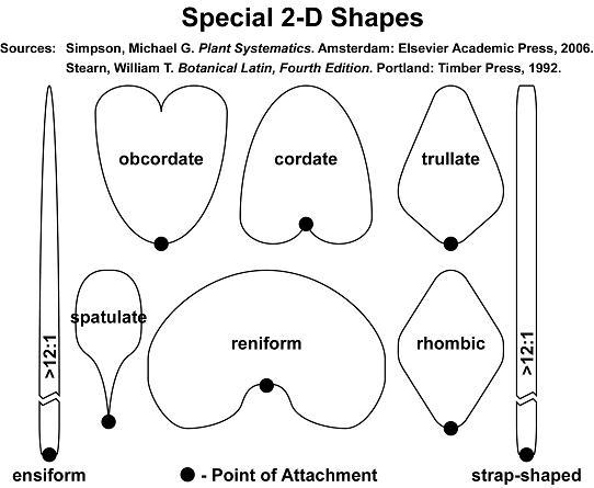 Special 2D-shapes